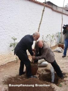Baumpflanzung Brasilien
